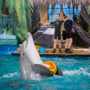 Дельфинарии, океанариумы Обухово