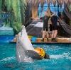 Дельфинарии, океанариумы в Обухово
